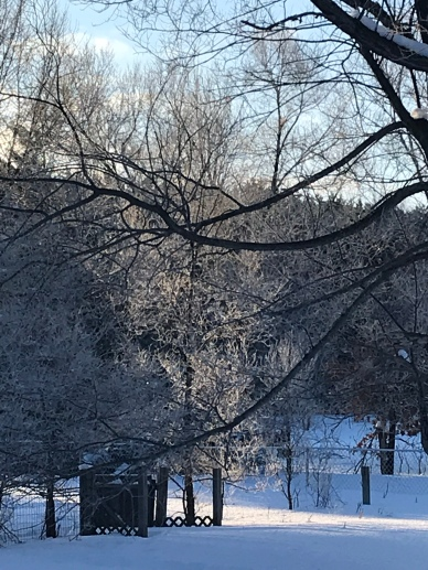 I wish I could have captured how the ice on the trees sparkled as it warmed up!