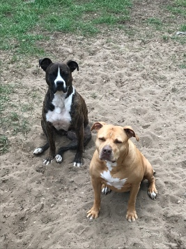 My pretty Pitties Stella and Essie