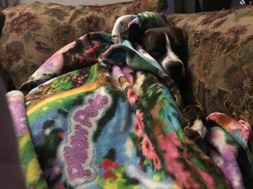 Blankets are a big deal here. Especially as the weather turns colder.