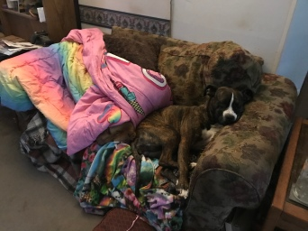 Essie in under the rainbow blanket lol