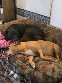 Bored pups