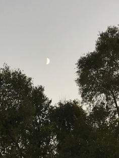 FINALLY! I was able to show the moon!
